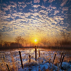 One Day At A Time by Phil Koch - Landscapes Prairies, Meadows & Fields ( vertical, travel, yellow, love, sky, nature, snow, weather, perspective, light, orange, trending, colors, art, twilight, white, mood, journey, horizon, portrait, country, environment, winter, dawn, season, serene, outdoors, lines, natural, hope, inspirational, wisconsin, ray, joy, landscape, sun, photography, life, emotions, dramatic, horizons, inspired, clouds, office, park, heaven, beautiful, scenic, living, morning, shadows, field, unity, blue, cattails, sunset, amber, peace, meadow, beam, earth, sunrise,  )