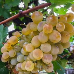 by Slavko Marčac - Food & Drink Fruits & Vegetables