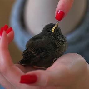 by Zeljko Padavic - Animals Birds (  )
