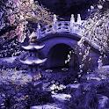 Mystic Sakura Live Wallpaper icon