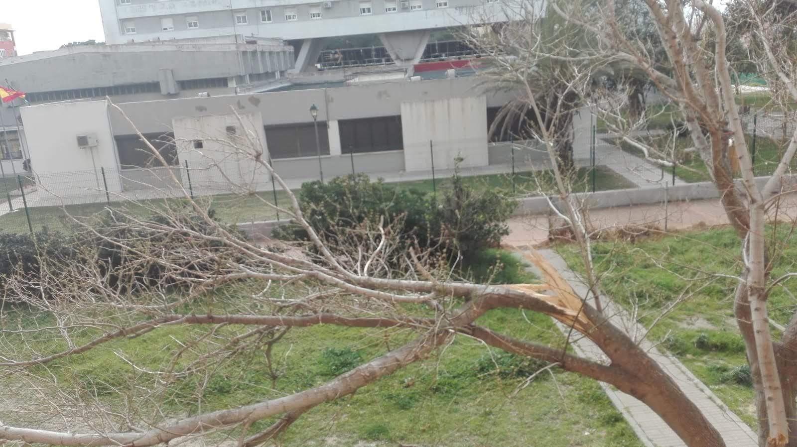 Adelante Algeciras considera un despropósito el abandono del alcalde a San José Artesano
