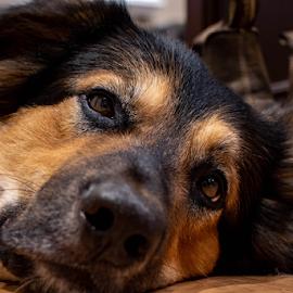 by Darren Sutherland - Animals - Dogs Portraits