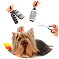 Dog Care & Grooming