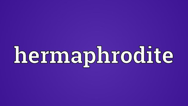an introduction to hermaphrodites Unlike most editing & proofreading services, we edit for everything: grammar, spelling, punctuation, idea flow, sentence structure, & more get started now.