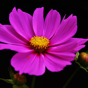 Purple Power by Laura Bentley - Nature Up Close Flowers - 2011-2013 ( plant, canada, purple, alberta, petals, summer, garden, flower )