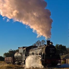 Steam train A by Trippie Visser - Transportation Trains ( grass, lamppole, train, steam sky )
