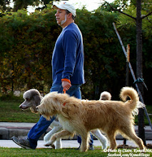 Photo: Nice dogs out walking their human Saturday!