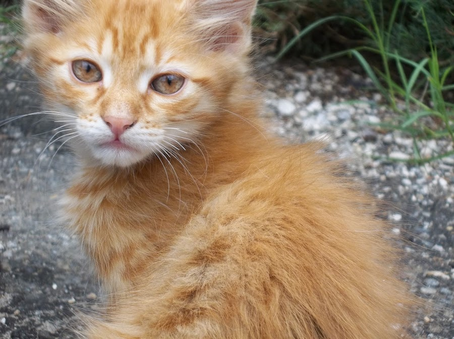 Коте by Georgi Kolev - Animals - Cats Kittens ( треви., коте., ден., светлина., цветове. )