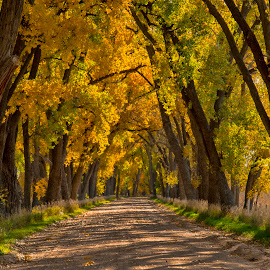 The Road Less Traveled by Jeff Cottingham - Transportation Roads ( foliage, fall, road, october, trees )