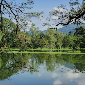 Lake by Daniel Kong - City,  Street & Park  City Parks ( reflection, park, green leaves, trees, lake,  )
