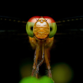 Smile by Pacu Jue - Animals Insects & Spiders