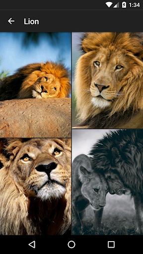 Wild Animal Wallpapers HD  screenshots 2