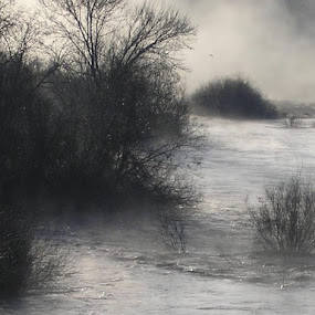 American River Overflow by Colleen Flynn - Landscapes Waterscapes ( river; water; fog; winter;,  )