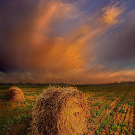 Life Keeps Rolling On by Phil Koch - Landscapes Prairies, Meadows & Fields ( trending, country, shadow, rural, office, scenic, hope, canon, beautiful, weather, season, sky, emotions, journey, natural, inspired, heaven, morning, field, light, peace, shadows, dawn, photography, love, sunrise, mood, vertical, clouds, fineart, sun, life, colors, unity, joy, lines, popular, arts, meadow, wisconsin, art, living, nature, inspirational, dramatic, portrait, horizons, horizon, environment, outdoors, sunset, earth, travel, serene, landscape,  )