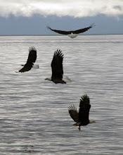 Photo: 4 Eagles