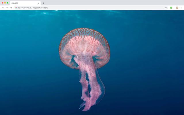 Jellyfish HD New Tabs Animals Themes