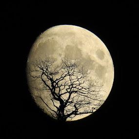 Moon Shot Silhouette by Simon Alun Hark - Black & White Landscapes ( moon, silhouette, haunted, space, landscape, moonlight, eclipse, sky, tree, lunar, scene, night, light, branches, black )