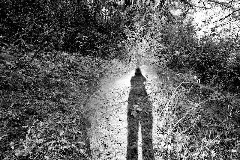 L'ombra a doppia altezza di ScrofaniRosaria