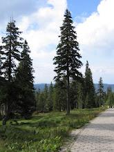 Photo: Droga z Hali Szrenickiej do Szklarskiej Poręby