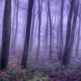 Misty Morning Winter Woods by Ceri Jones - Landscapes Forests ( woodlands, foggy, forest, woods, winter, trees, misty )