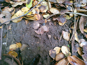Photo: Here is the soil up the slope, under the canopy.