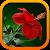 Комнатные растения беспл. file APK for Gaming PC/PS3/PS4 Smart TV