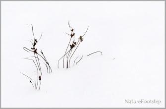 Photo: Winter grass © NF PhotoArt 130113 http://nfbild2.blogspot.se/2013/01/winter-grass.html http://nfbild2.blogspot.se/2016/09/winter-grass.html