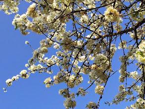 Photo: By Charlotte de Chateauvieux http://charlottedechateauvieux.blogspot.fr/