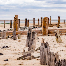 Beach Stumps by Andrew Robinson - Landscapes Beaches ( crow point, devon, beach, stumps )