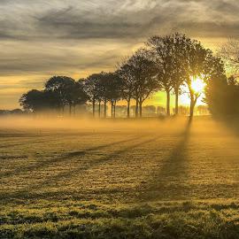 Sunrise  by Peter Art - Nature Up Close Trees & Bushes ( #sunrise #netherlands #thenetherlands #rhoon #rotterdam #rotterdamcity #orange #yellow #tree #trees )