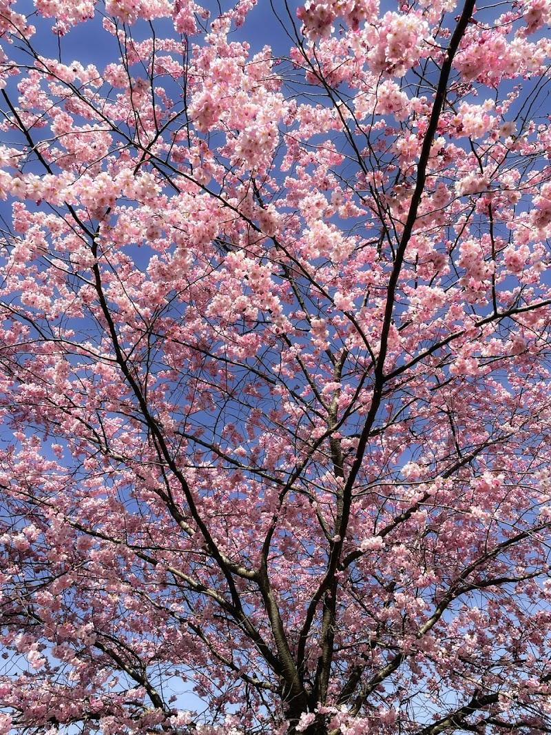 La vita senza amore è come un albero senza fiori o frutta. (Khalil Gibran) di Capirizzo