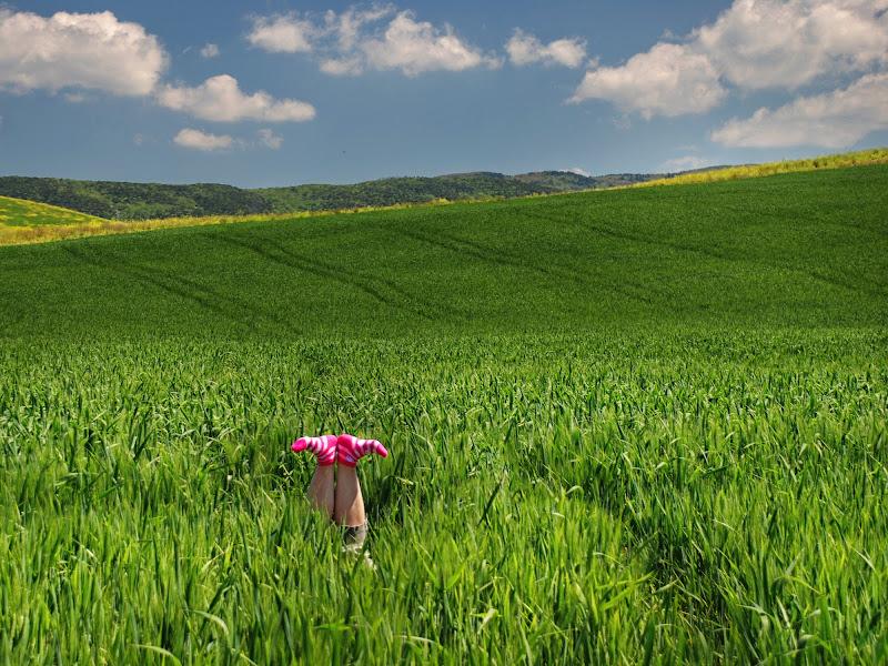 Strani fiori questa primavera! di franca111