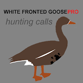 White Fronted Goose Calls
