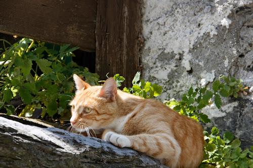 Flims, Crestasee, Graubünden, Switzerland by Serguei Ouklonski - Animals - Cats Portraits ( stone wall, fur, cats, feline, outdoors, cat, fence )