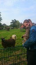 Photo: socialiseren op de kinderboerderij (Meaghan)
