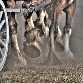 Horse Power by Guy Longtin - Artistic Objects Other Objects