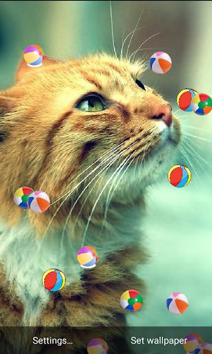 S5 Cat Change Ball Wallpaper