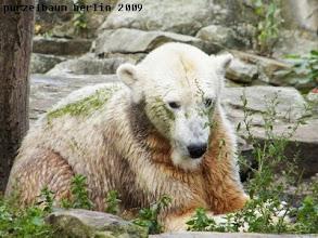 Photo: Knut hat die Schlafkuhle wieder in seinen Besitz genommen ;-)