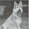 Photo: 1999 Luhana du Clos de la Sapineraie (Essouna du Clos de la Sapineraie x Flipper du Chateau de Kaysersberg) Prod et Prop Mme Bucher Fraigneau Pedigree: http://www.pawpeds.com/db/?a=p&id=885676&g=4&p=bpi&o=ajgrep