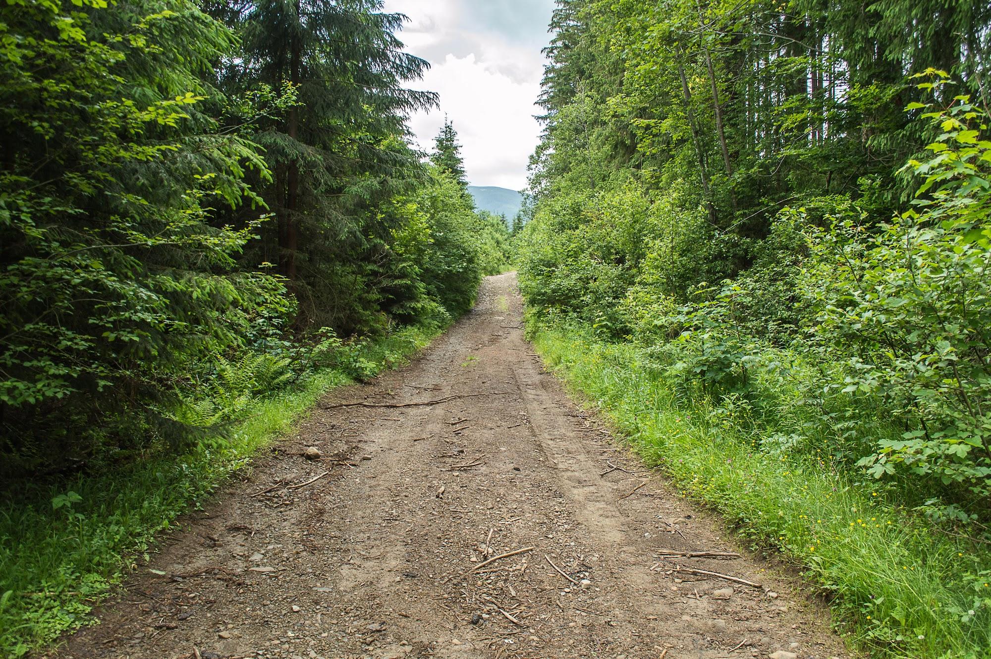 Дорога вздовж р.Котелець