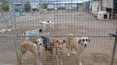 Perros en la Sociedad Protectora de Animales.