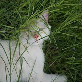 Casper the Friendly Ghost- Rescue Kitty by Deborah McLeod McDonald - Animals - Cats Portraits