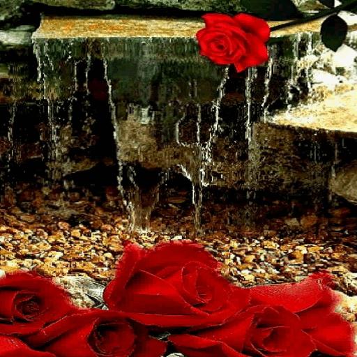 Rose Waterfall Live Wallpaper