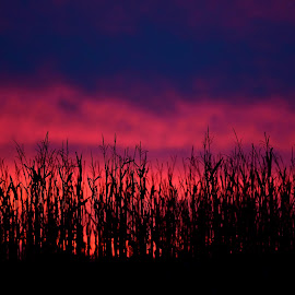 Sunset by Ruth Overmyer - Landscapes Sunsets & Sunrises (  )