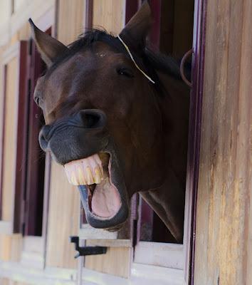Un cavallo sorridente di elit