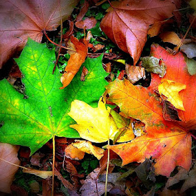 Green & Brown by Vandy Ahmad - Nature Up Close Leaves & Grasses ( fall leaves on ground, fall leaves, green, one, peace, brown, still, leaves, soft )