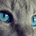Cat Wallpapers 4K icon