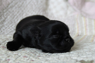 Photo: Male 11 days old