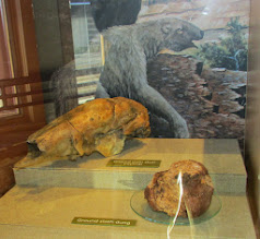 Photo: Giant Ground Sloth!!!! Skull and Poo.