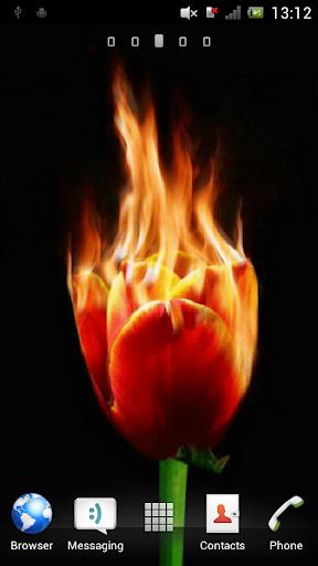 Burning tulip Live Wallpaper
